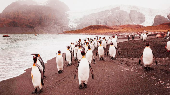 Explore the antarctic