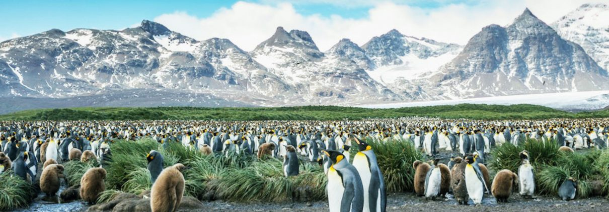 Antarctica cruise: exhilarating exploration at the edge of the world