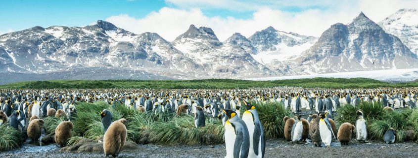 Antarctica cruise: exhilarating exploration at the edge of the world