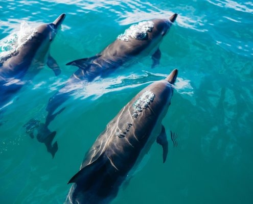 sailing the aeolian islands dolphins